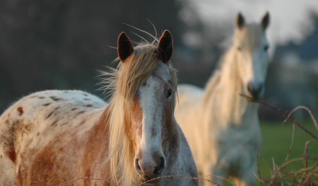 Sophrologie et équitation : une nouvelle relation entre le cavalier et son cheval !